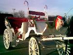 WHITE CARRIAGE USED FOR XMAS PARADE